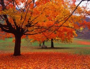 (09) Fall Leaves